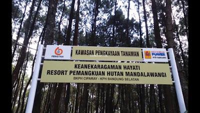 Hutan Mandalawangi Geothermal Kamojang Bandung