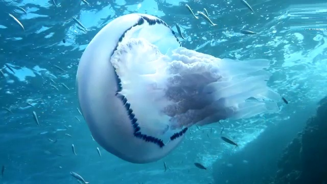 Top 10 Oldest Animal Species on Earth 3. Jellyfish
