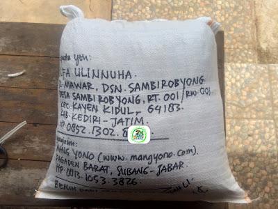 Benih padi yang dibeli    ULFA ULINNUHA Kediri, Jatim. (Setelah packing karung ).