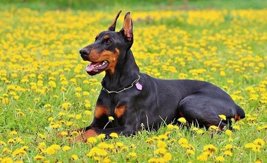 اسرع 10 كلاب في العالم