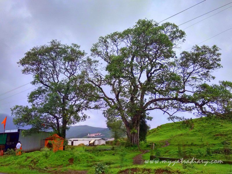 Exquisite Beauty on the Trimbakeshwar -Ghoti road near Nashik, Maharashtra