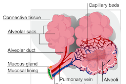 Peritoneal Mesothelioma - Median Survival Rate