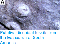 http://sciencythoughts.blogspot.com/2019/01/putative-discoidal-fossils-from.html