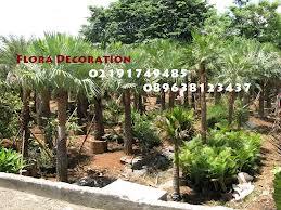 harga jual palm kopernis murah