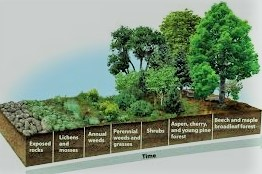 Ecological Succession Basic Types of Succession Reasons for Succession.