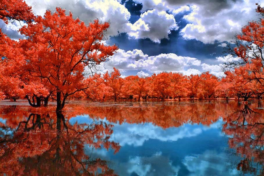 natural-red-lake-trees-wallpaperv