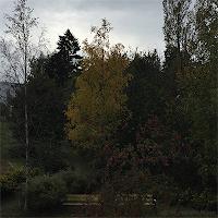 Høst i Oslo.