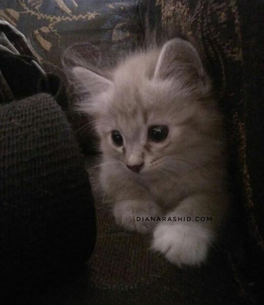 Ubat Kutu Kucing Yang Sekali Pakai Kutu Kucing Dah Tak Ada Diana Rashid