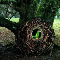 G2R Grove Hidden Wild Escape