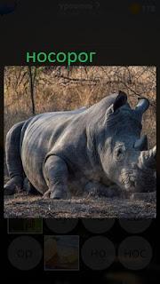 389 фото носорог лежит на земле в одиночестве 7 уровень