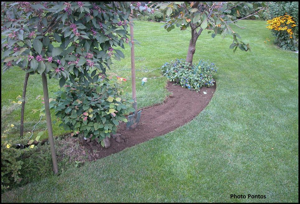 Un giardino di perenni in ticino come creare un 39 aiuola di for Piante da aiuola