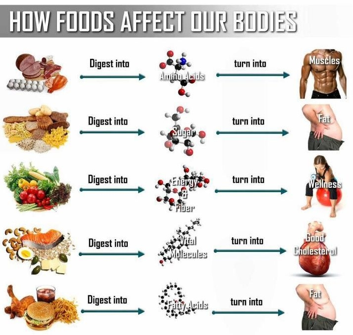 Food Good For The Muscles