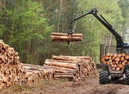 Ormancılık ve Orman Ürünleri ne iş yapar