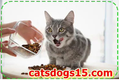 Feeding Your Adult Cat: What You need to recognize
