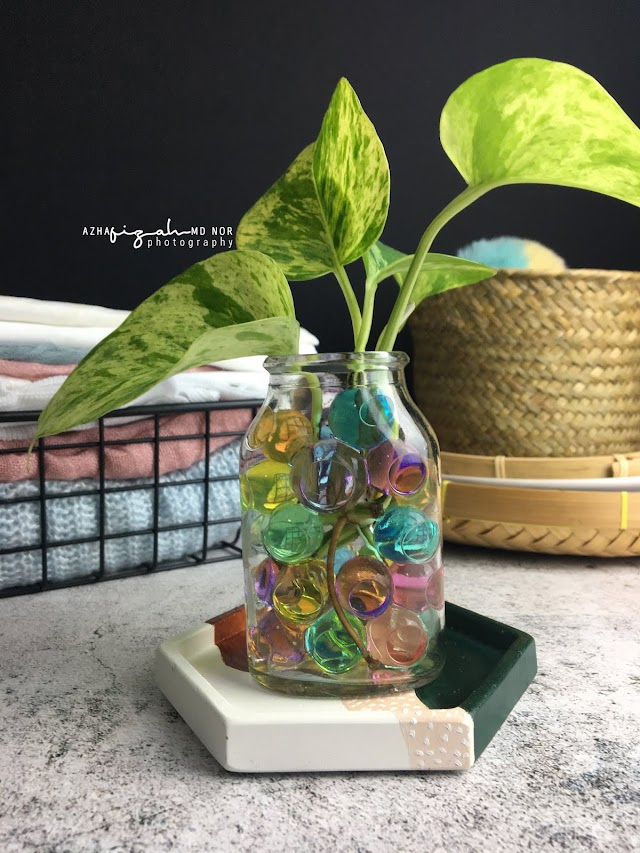 Water Crystal Gel Untuk Indoor Plants