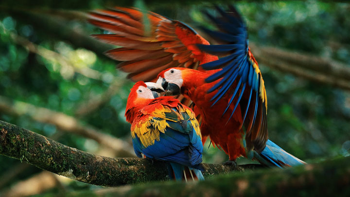 interesting-facts-about-parrot