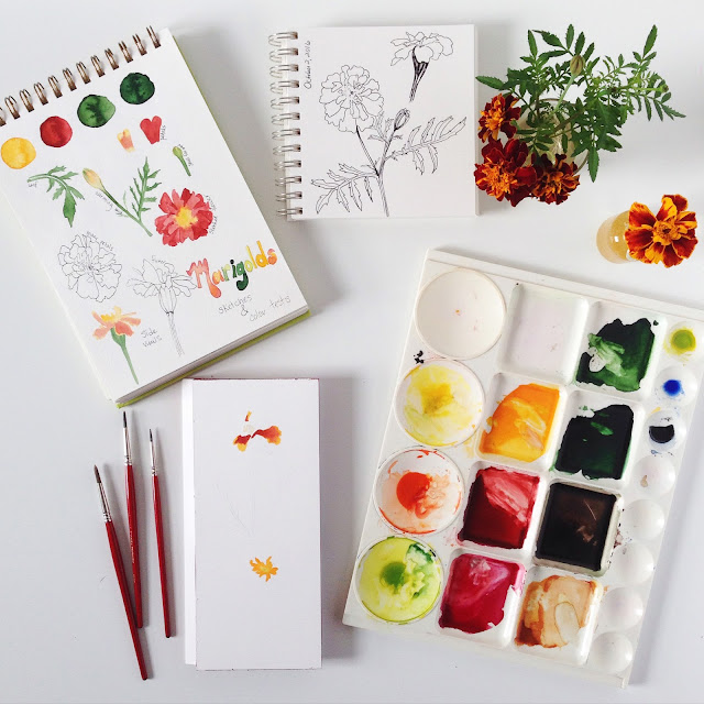 marigolds, inspiration, studio, painting, sketchbooks, botanical watercolor, botanical sketchbooks, watercolor, Anne Butera, My Giant Strawberry