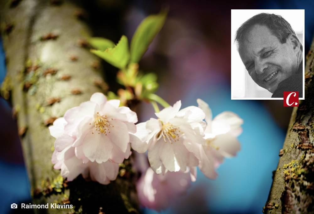 literatura paraibana poesia clovis roberto flores chuva cotidiano