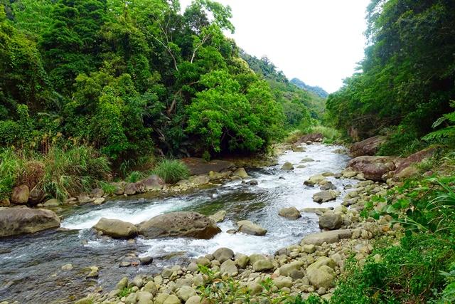 蓬萊溪護魚步道~苗栗觀魚、踏青、賞桐步道