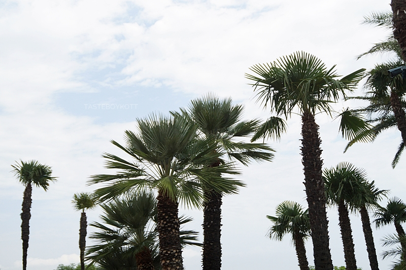 Palm trees on a cloudy day in Monaco