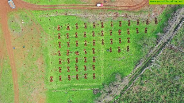 El Paso coordinará la entrega y plantación de almendreros con los vecinos, con la colaboración las Agencias de Extensión Agraria y la Reserva de la Biosfera