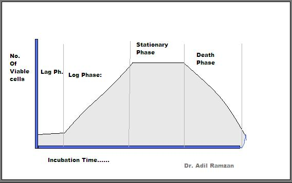 table-showing-phases-of-bacterial-growth