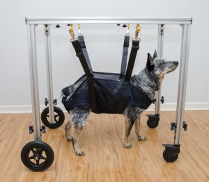 caminhador para cães sem mobilidade