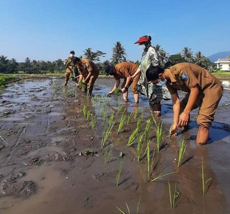 Luasan Lahan Musim Tanam Ketiga Provinsi Banten, Prediksi 37 Hektar