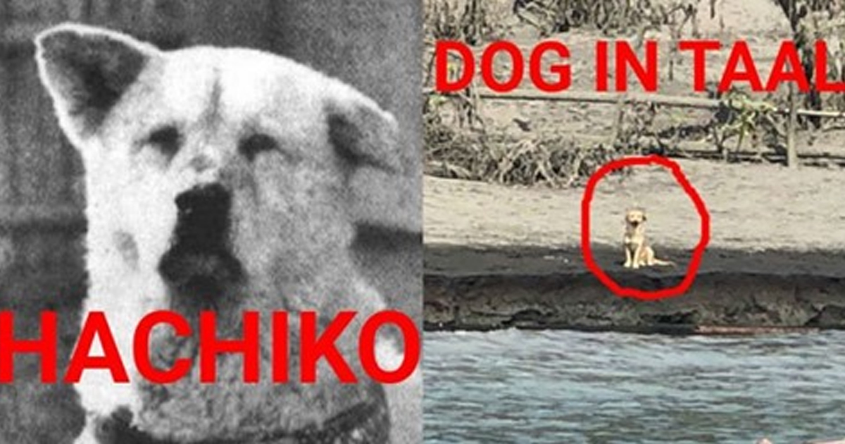 Just like Hachiko, dog left behind in Taal patiently waits for its master to return