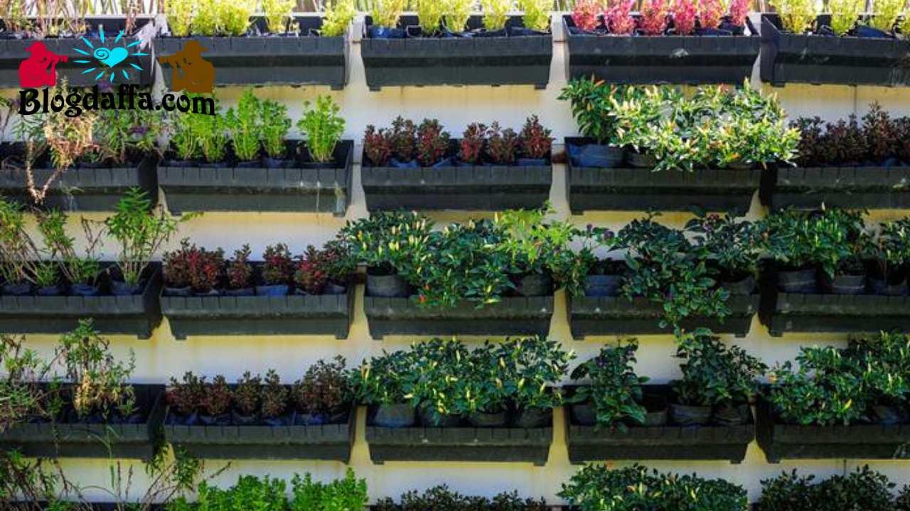 Kebun sayur mini bertingkat di dinding