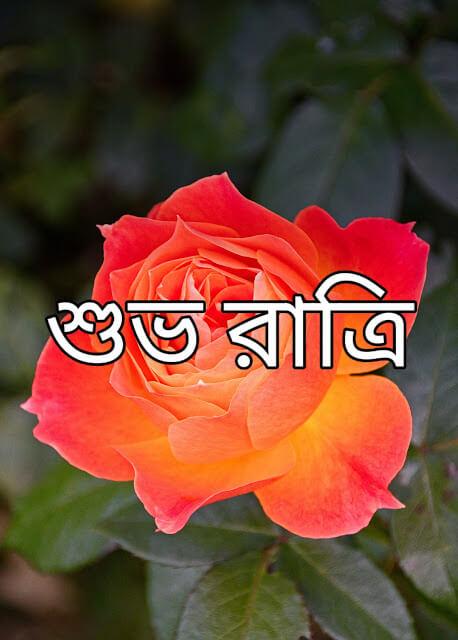 Good Night Bangla Image Free Download | শুভ রাত্রি Bangla Image Free Download