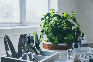 A green houseplant under a window on a counter next to a sink with drying utensils in it.