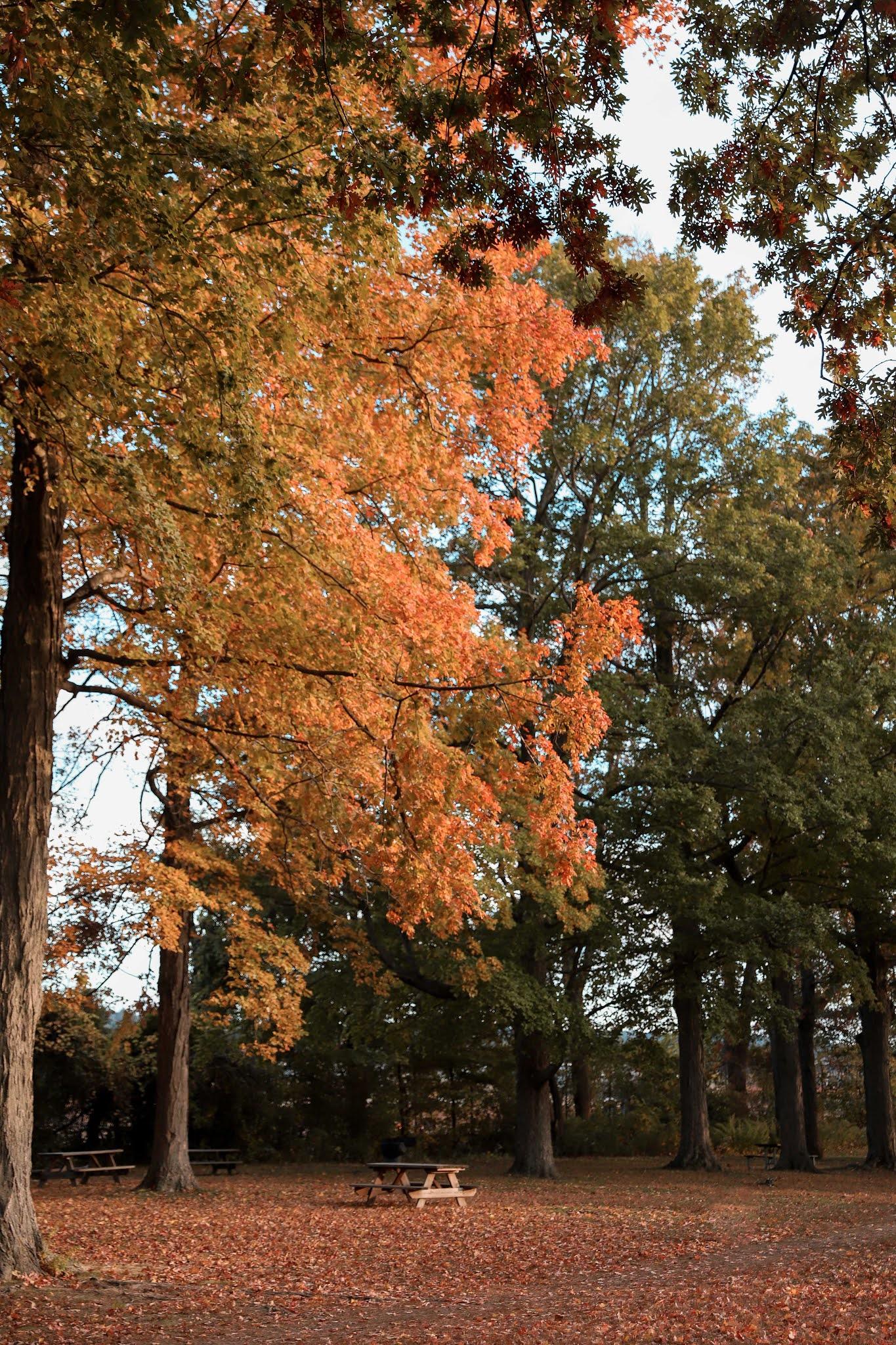 Sleepy Hallow Fall Foliage