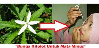 manfaat bunga kitolot