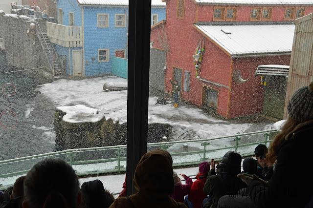 Winter-Robbenshow Erlebnis-Zoo Hannover