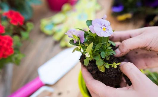 Cara Mudah Menanam Bunga Untuk Pemula
