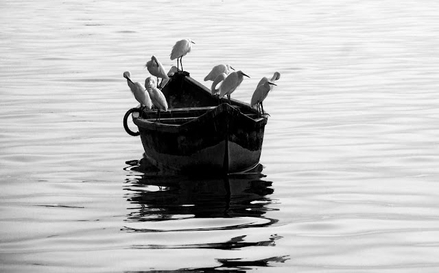 arabian sea, birds, black and white, black and white weekend, boat, egrets, india, monochrome monday, mumbai, worli,