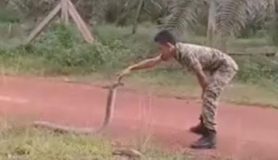 Prajurit tangkap king kobra
