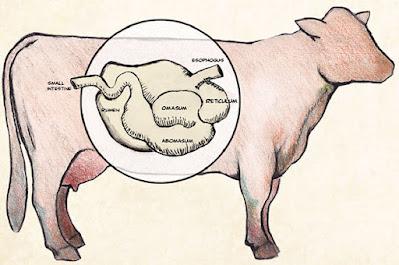 20 Incredible benefits of probiotics to strengthen the gut