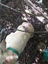 HORRIPILANTE: GPM de Barra D`Alcântara prende homem por maus tratos a animais.