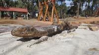 BIG Crevice Dragon at Mundaring's Sculpture Park