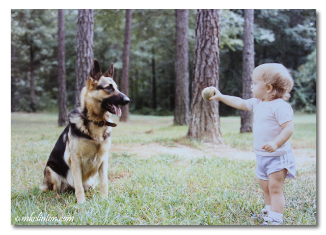 Toddler offering ball to German Shepherd