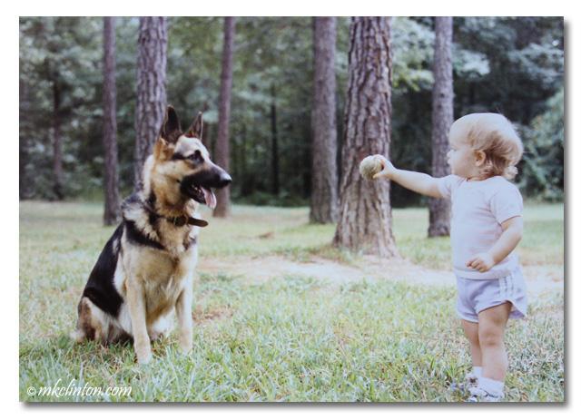 Toddler offering ball to German Shepherd