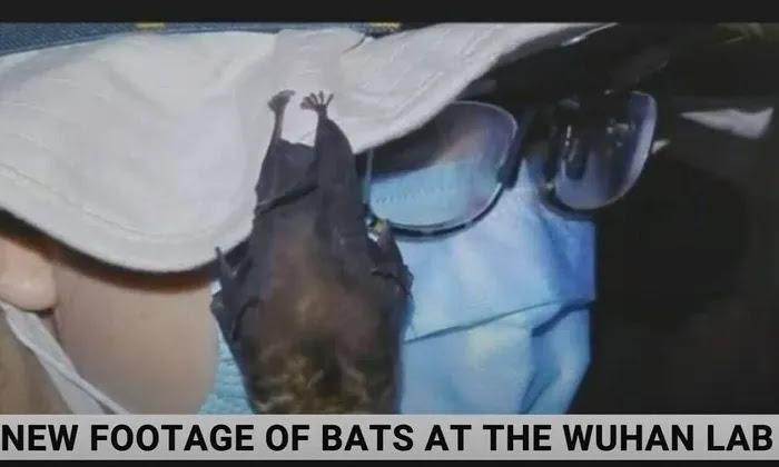 Βίντεο – αποκάλυψη του Sky News: Ζωντανές νυχτερίδες μέσα στο εργαστήριο της Γουχάν