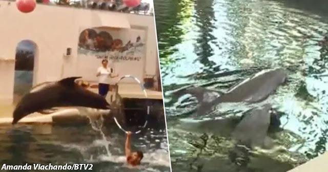 Маленький дельфин умер от переутомления прямо во время шоу в аквапарке Болгарии