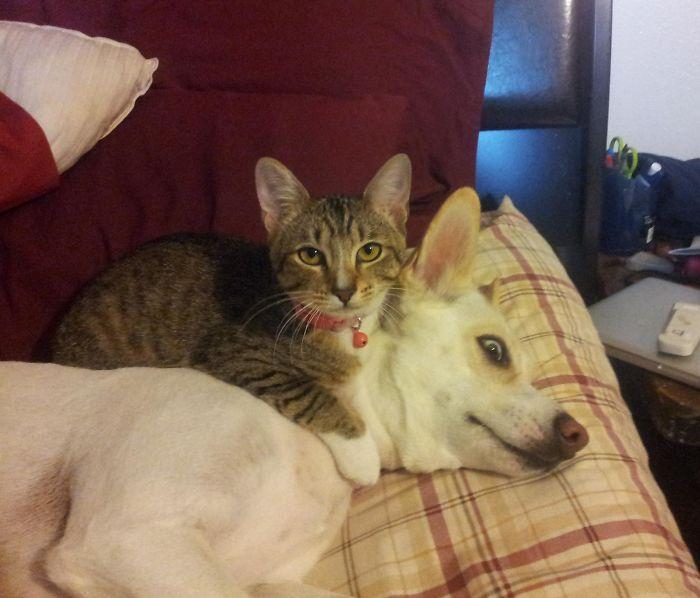 20 Foto Keakraban Kucing dan Anjing