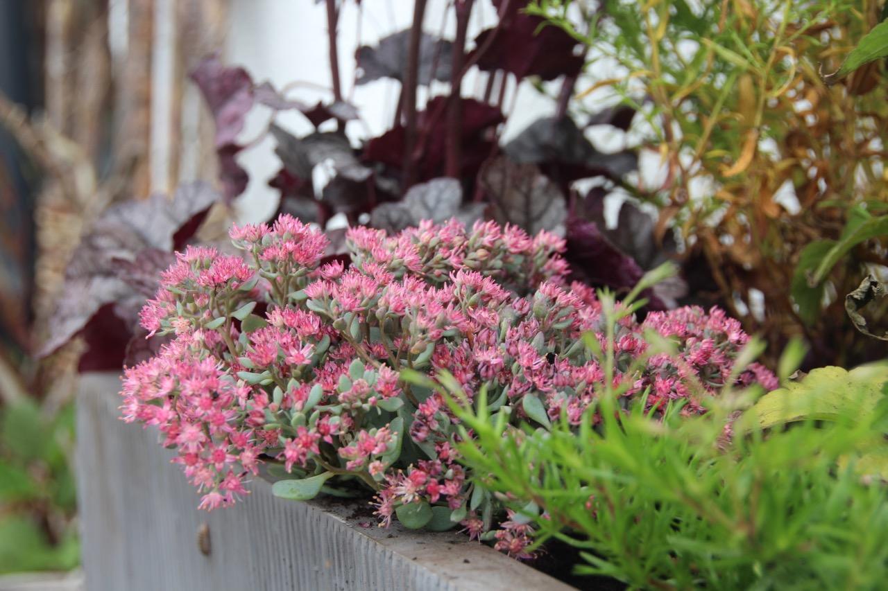 insektenfreundliche herbstbepflanzung im k bel bergblumengarten. Black Bedroom Furniture Sets. Home Design Ideas