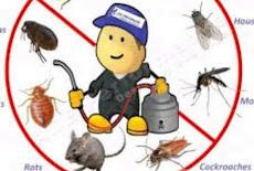شركة مكافحة حشرات بالقطيف (( للايجار 01063997733)) رش مبيدات ابادة فورية للحشرات الزاحفة والطائرة فى القطيف