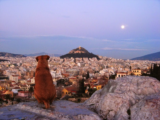22. Athens is one of the most underrated cities in the world. (A dog looks out over Athens to Lykavittos Hill.) - 49 Reasons To Love Hellas (Greece)