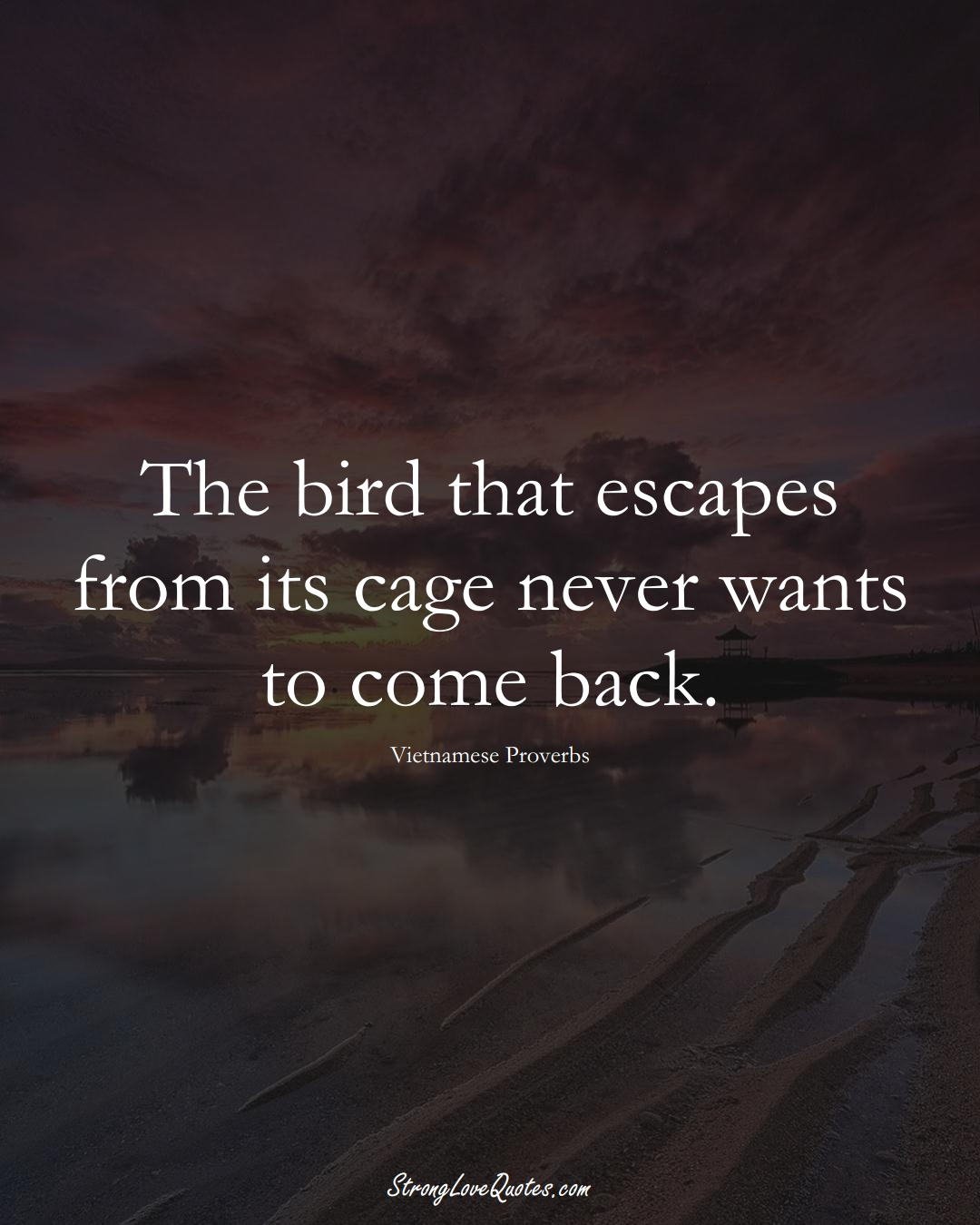 The bird that escapes from its cage never wants to come back. (Vietnamese Sayings);  #AsianSayings